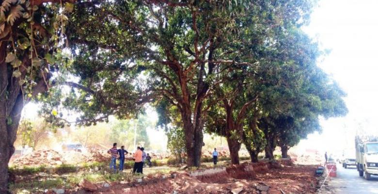 Goencho Avaaz protect Mango Trees outside Colvale