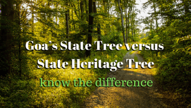 Photo of Goa's State Tree vs State Heritage Tree – know the difference