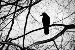 solitary bird in silhouette