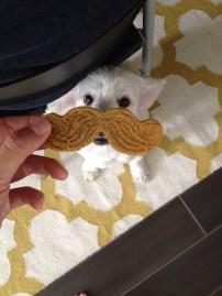 Bentley_Mustache6