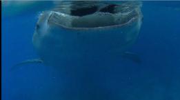 Photo of shark eating