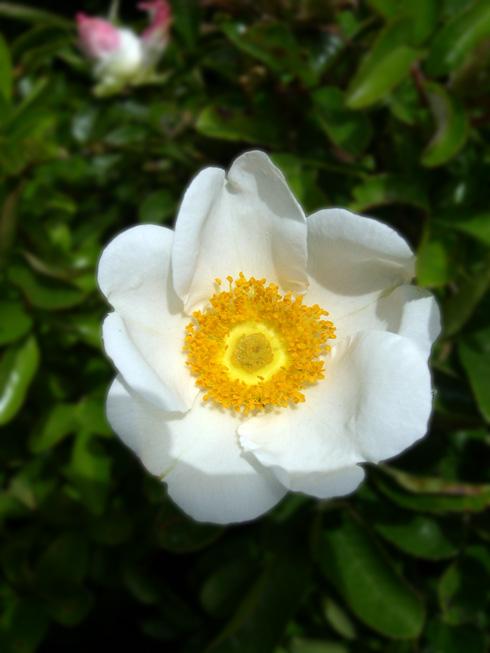 White Flower at AIDS Walk