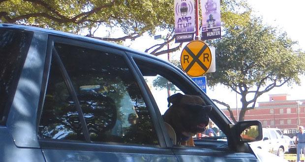 Texas Car Riding Dog
