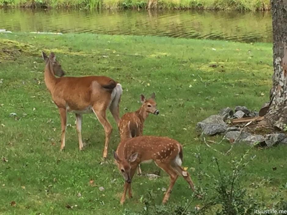 deer4