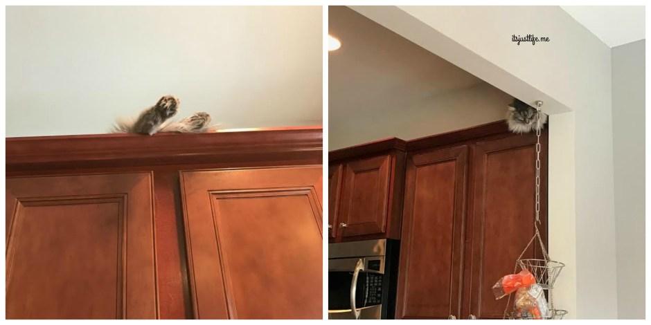 Diego's favorite perch.
