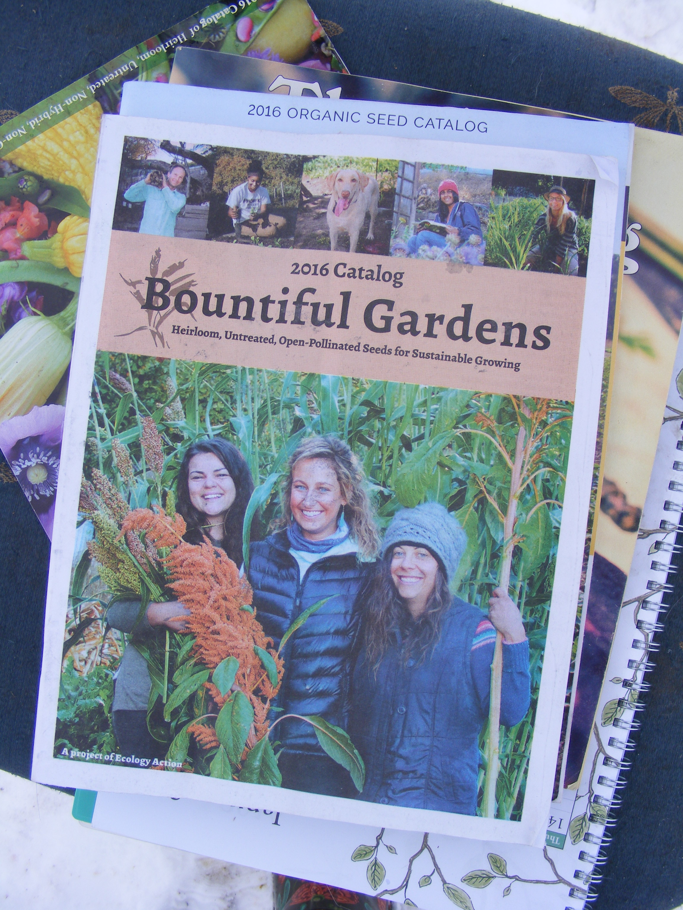 Seed Catalogs I Recommend For Heirloom Open Pollinated