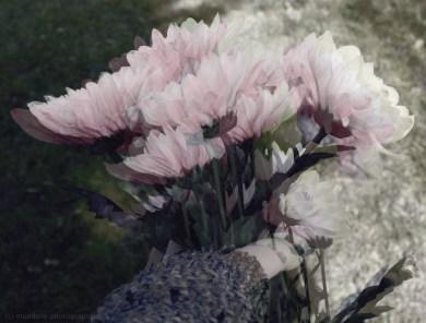 distortedflowers