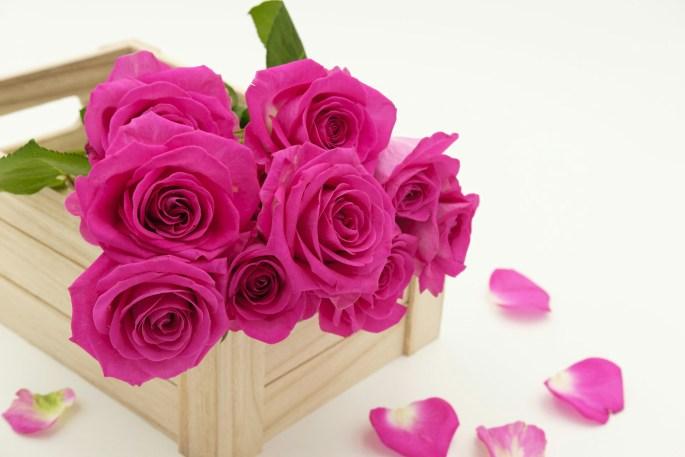 bouquet 3158355 19202140131956
