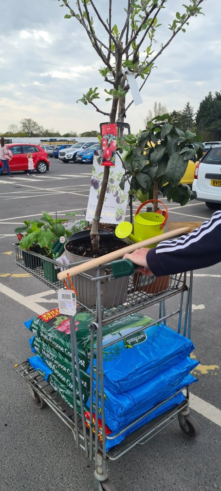 St Peters garden centre worcester - plum, apple and lemon trees, strawberry plants, tomato plants and herbs