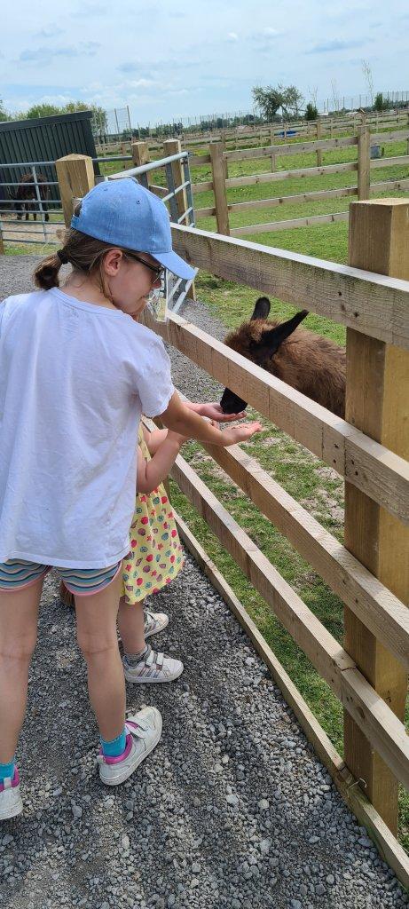 Animal Farm Adventure Park