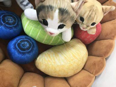 癒されネコ好きはフェリシモをチェックする!インスタ映え「猫部」可愛い小物大集合、最新情報にゃ~♪