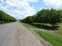 0221-1622_Transnistria_Rybn_20160607_19