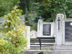 Cluj graveyard
