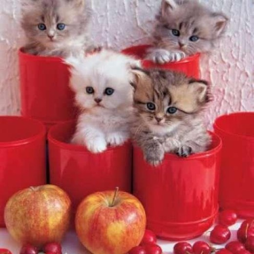 beautiful-cats-wallpapers for mobile-2013