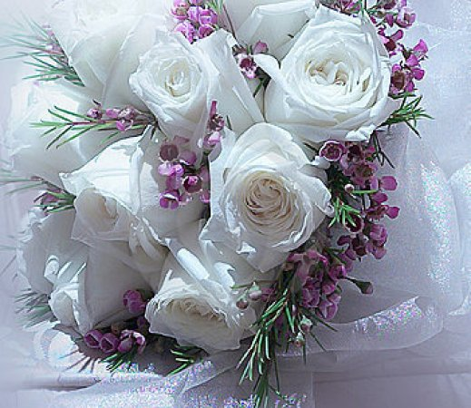 Beautiful picture of white roses wallpaper