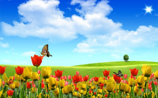 Latest-HD-widescreen-Flowers-wallpaper 2013 2014