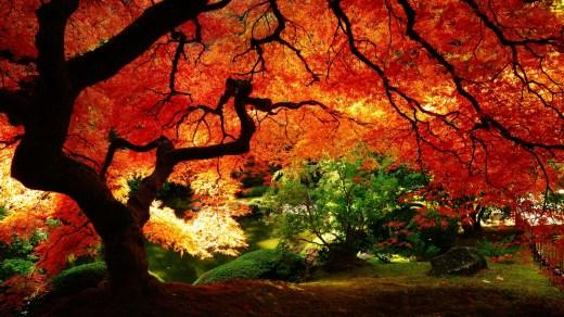 amazing-autumn-season-pictutes-2013-2014
