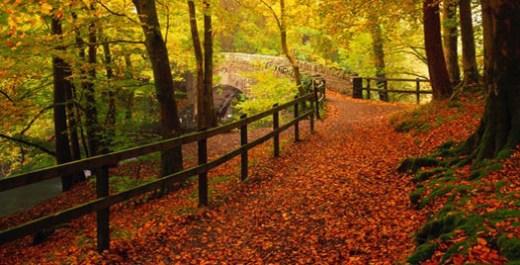 autumn-season-hd-widescreen-wallpapers-for-desktop-2013-2014