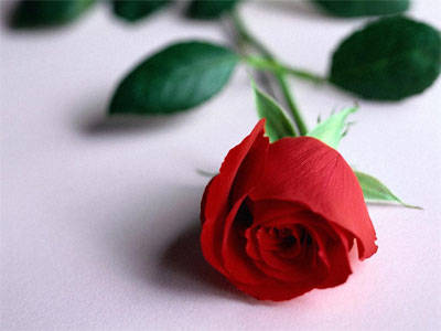 Happy Romantic Red Rose Wallpaper Share At Facebook With Friends