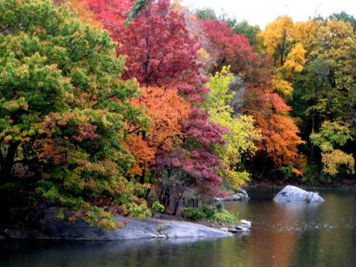 latest-HD-widescreen-autumn-wallpapers-for-mobile-2013-2014