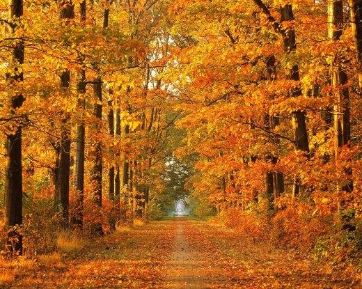new-autumn-season-high-definition-wallpapers-2013-2014