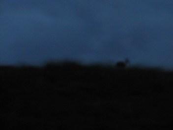 Het hert, dat rare sprongetjes maakte toen het ons zag. Ik had mijn fototoestel nog niet goed in de aanslag, dus de foto is heel vaag. Maar het was zó bijzonder.