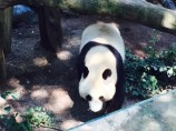 san diego-zoo 3