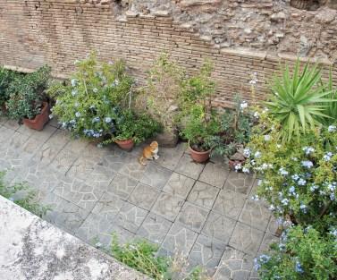 Largo di Torre Argentina-cat colony-1