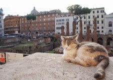 Largo di Torre Argentina-cat colony-3
