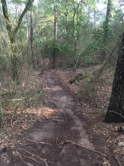 trail running houston