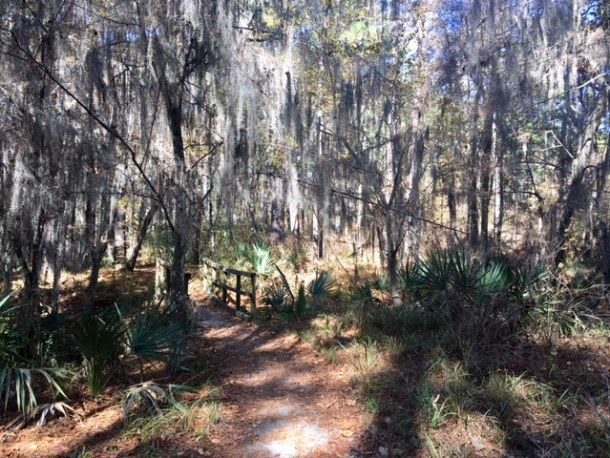 hiking near Houston Forest map