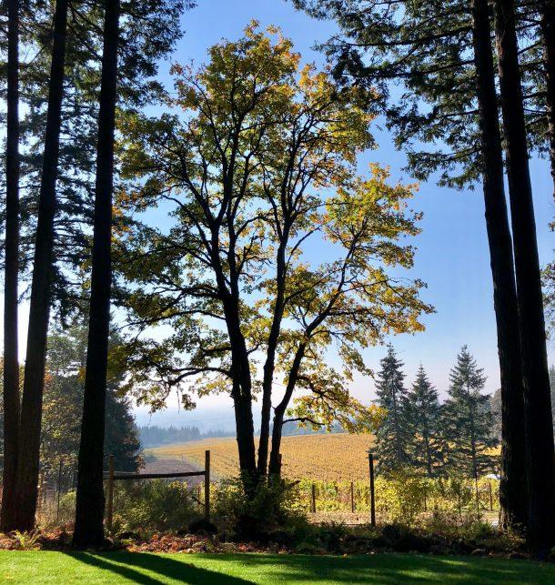 Oregon wine