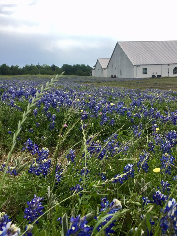 where to take bluebonnet photos texas