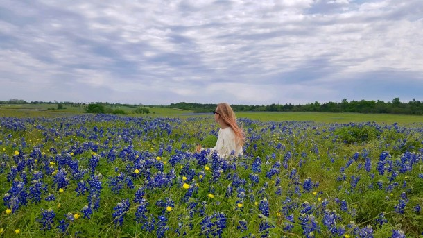 where to take bluebonnet photos houston