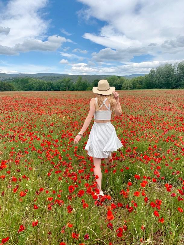 rousillon provence poppy fields