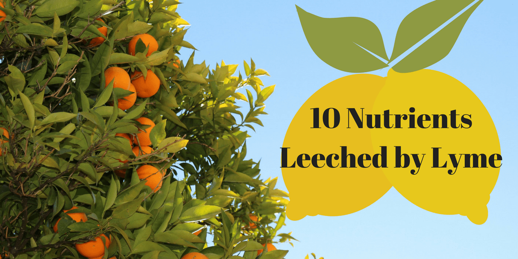 10 Nutrients Leached by Lyme and How to Replenish Them
