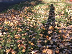 shadowinleaves
