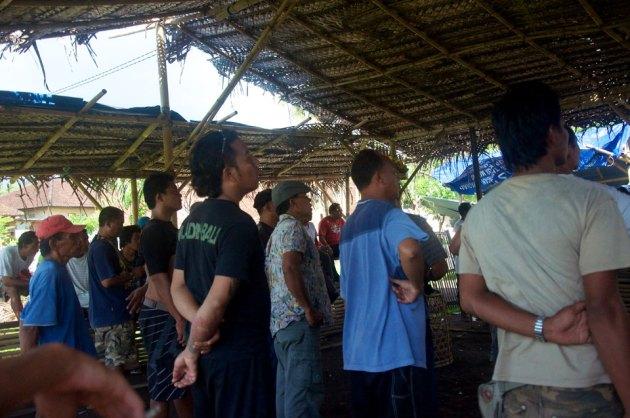 Петушиные бои в Индонезии