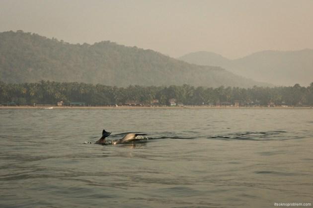 Смотреть дельфин туры на Палолеме, Гоа