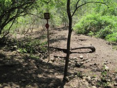Komodo Dragon Nest Area