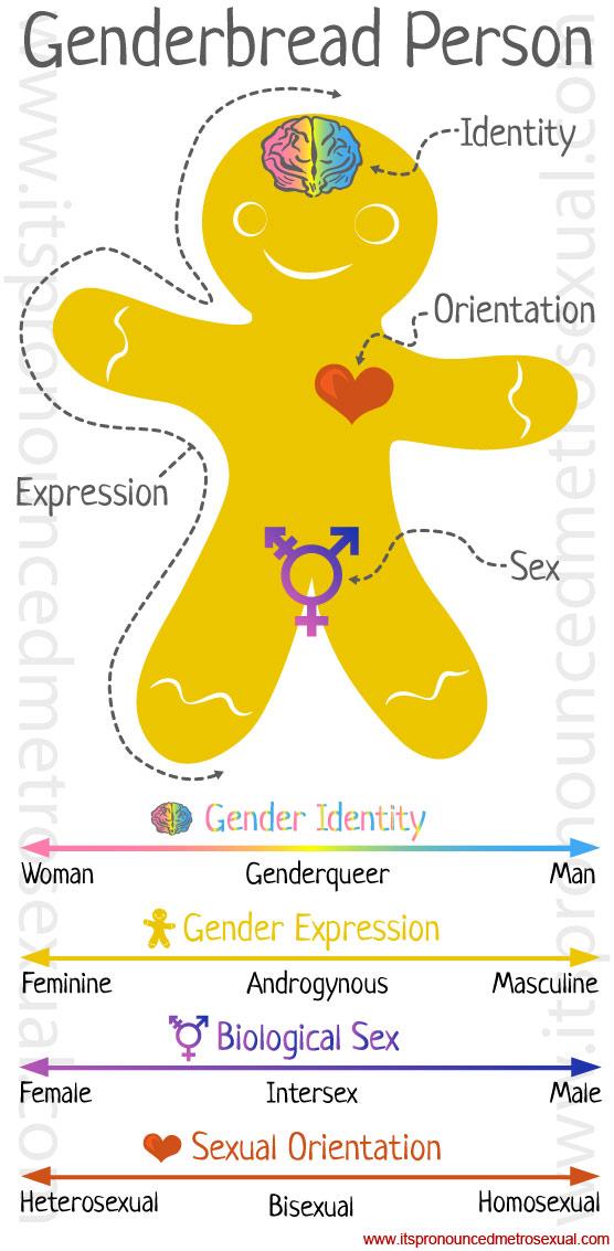 Genderbread Person: Gender Identity Explanation Graphic