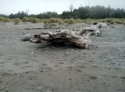 tons and tons of driftwood