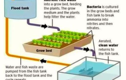 Difference between hydroponics and aquaponics ?