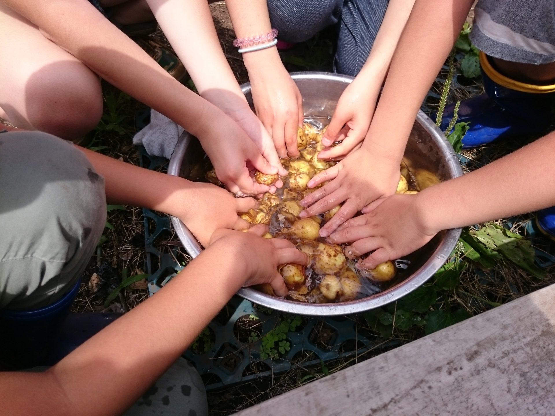 収穫体験を行いました!