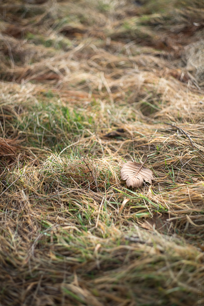 ITSUMO_Bowen Grass Field_Slider_2020-03