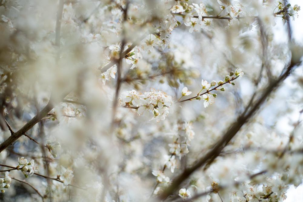 ITSUMO_white blossoms_spring_slider_2020-03
