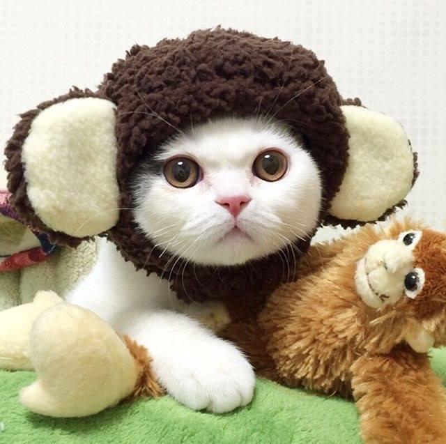 Kittens n\u0027 Cats in Wee Little Hats! \u2022 IttyKitty.com