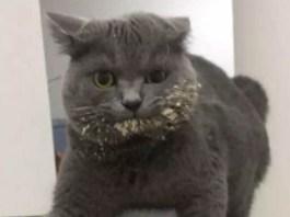 jerkiest-cats-feat