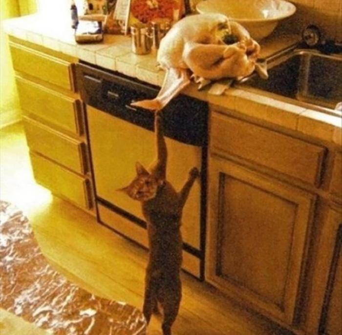 master cat thieves