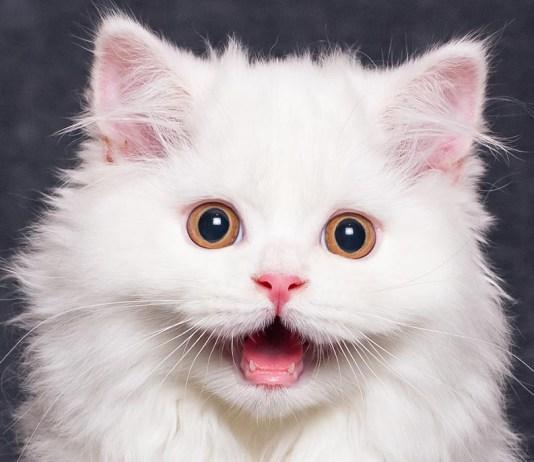 fuzzy kitten and not so fuzzy kittens feat 1